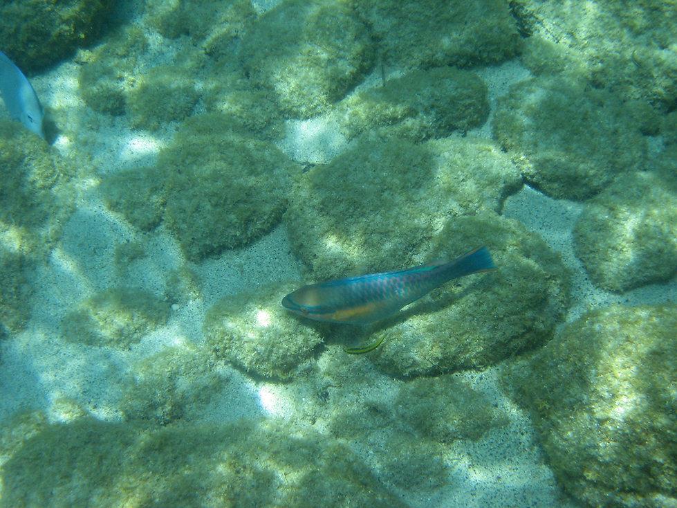 ïles Pigeons - Réserve Cousteau