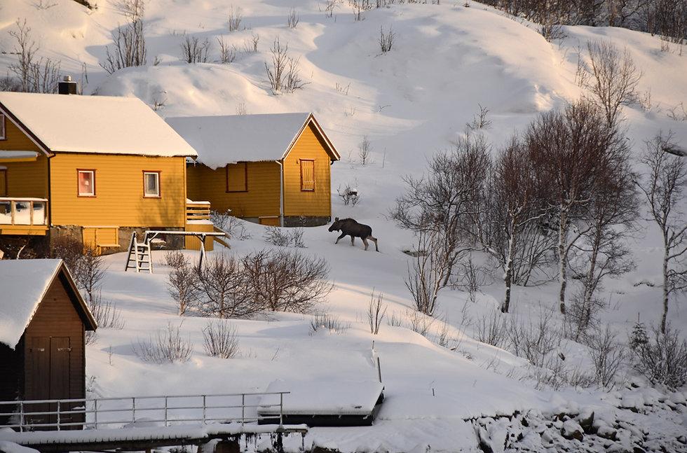 Norvège - Elan