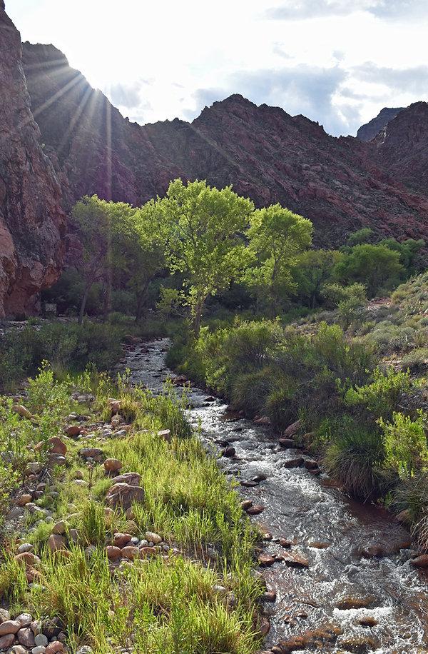 Arizona - Grand Canyon National Park - Bright Angel Creek