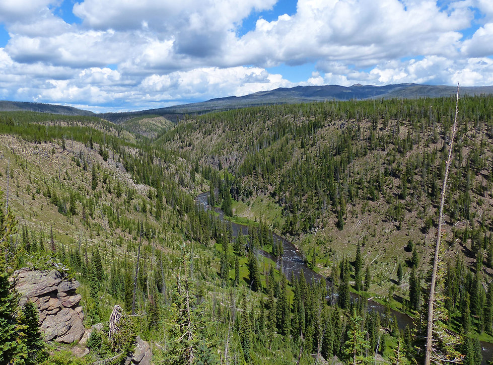 Yellowstone National Park Lewi River