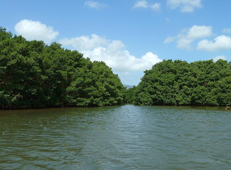 Grand cul de sac marin - mangrove