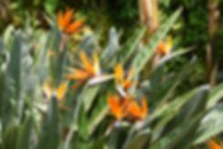 villa taranto verbania jardin oiseaux de paradis