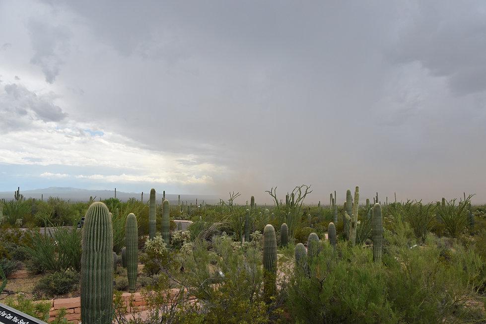 Arizona - Saguaro National Park
