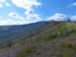 Yellowstone National Parc mont washburn