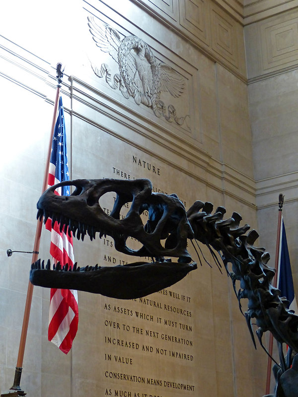 New-York - American Museum of Natural History