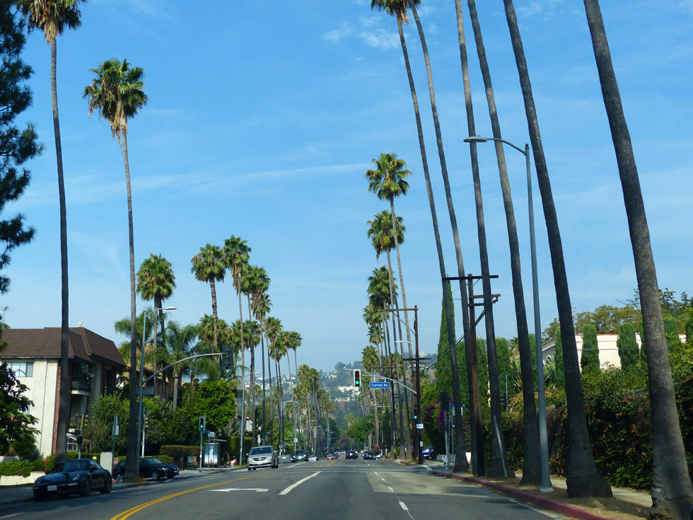 Los Angeles Hollywood palmiers rue