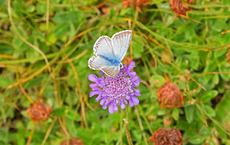 Randonnée Pierre Avoi - Suisse - Verbier - papillon