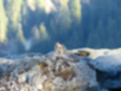 Yosemite National Park Ecureuil