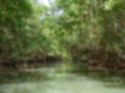 Grand cul de sac marin - mangrove - rivière moustique