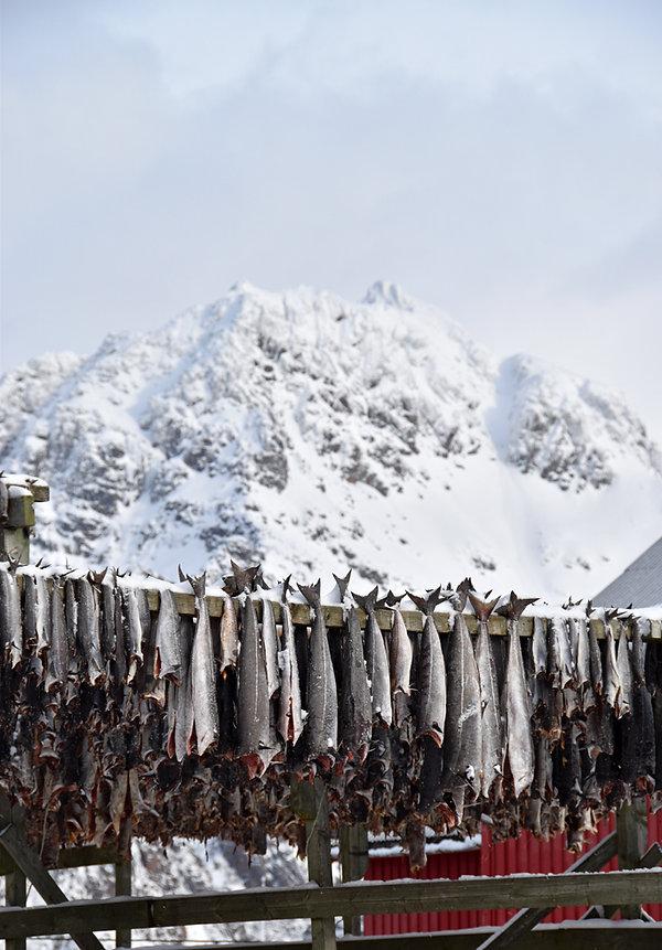 Norvège - Henningsvær - séchoir morue