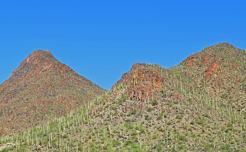 Saguaro National Park - cactus