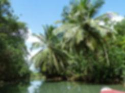 Guadeloupe - rivière moustique