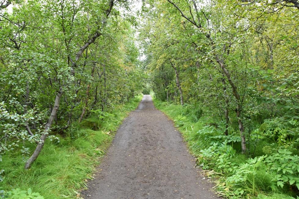 Islande Iceland Lac Myvatn Höfdi forêt bois arbres