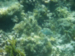 Grand cul de sac marin - snorkelling