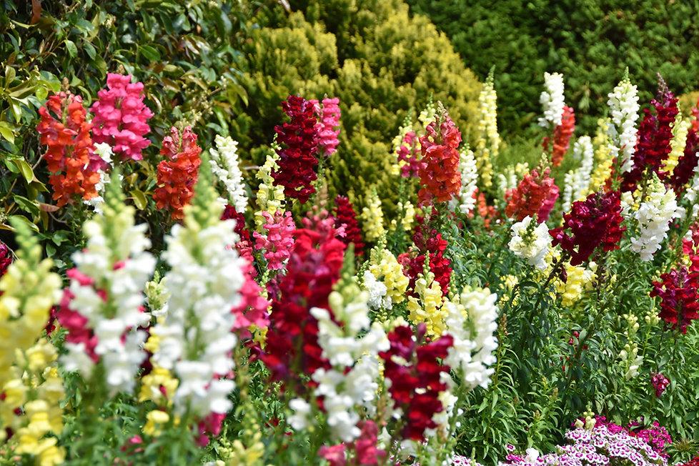 villa taranto verbania jardin fleurs