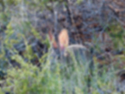 Grand Canyon National Park Rim Trail lapin