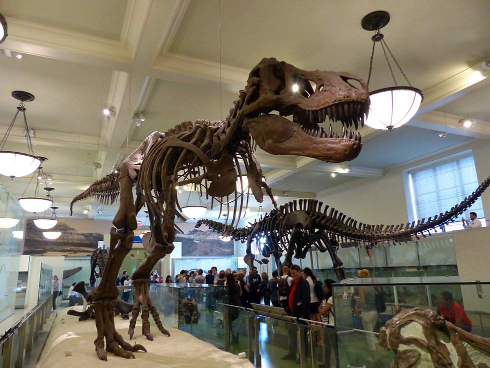 New-York - American Museum of Natural History - Trex