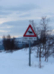Norvège - Kvaløya - panneau élan