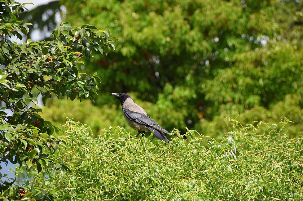 villa taranto verbania jardin oiseau