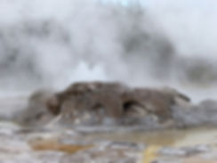 Yellowstone National Park Upper Geyser Basin Grotto Geyse
