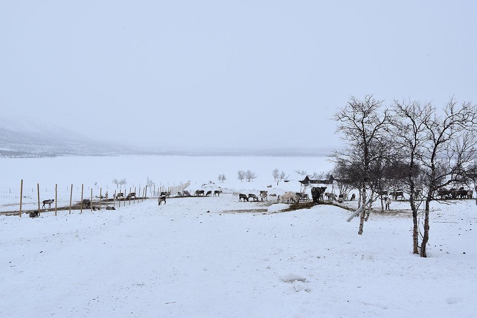 Finlande - Kilpisjärvi - Rennes