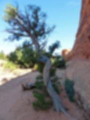 Arches National Park Devil's Garden Arbre pin