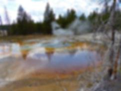 Yellowstone National Parc Norris Geyser Basin Minute Geyser