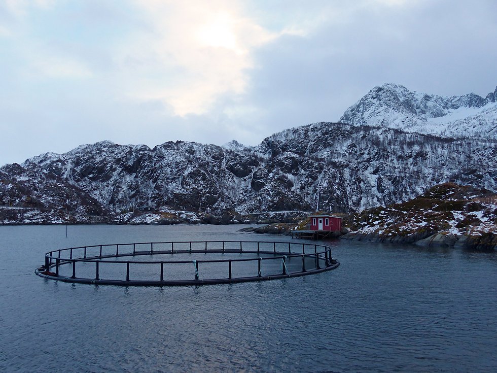 Norvège - Senja - Hamn - ferme poisson