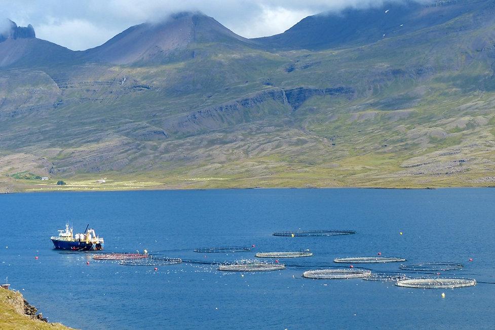 Berufjördur ferme piscicole islande iceland boat bateau