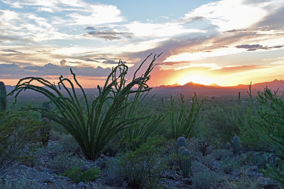 Arizona - Saguaro National Park - Signal Hill