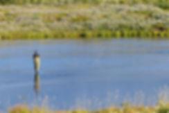 West ranga lodge islande iceland lax-a salmon