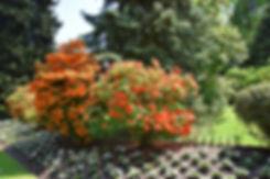villa taranto verbania jardin azalées