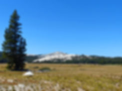 Yosemite National Park Tuolumne Meadows