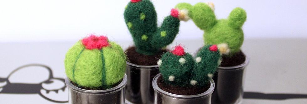 Mini Cacti Plant