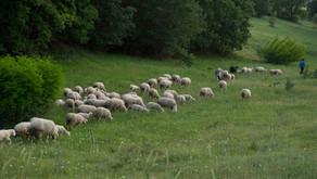 Onarıcı, Adil, Besleyici: SafiMera Hayvancılık