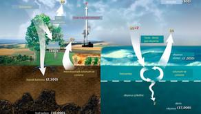 Toprağa Niçin Karbon Gömüyoruz?
