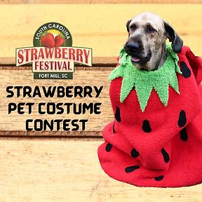 Strawberry Pet Costume Contest 2021 IG.p