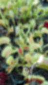 green swap.jpg