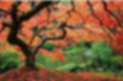 __EDEN 2018-11-12 at 5.52.51 PM.png