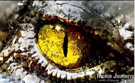 Reptilian Eye.png