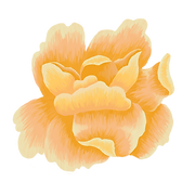 Flowers_Individuals6.png