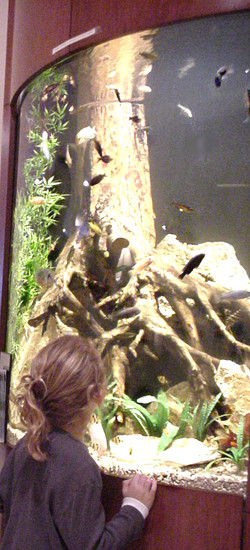 Bowfront Alcove Aquarium