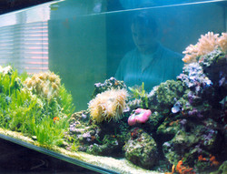 Live Reef with Viewer on Other side