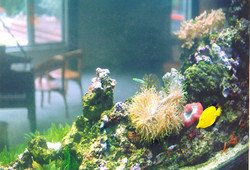 Close up View of Live Reef