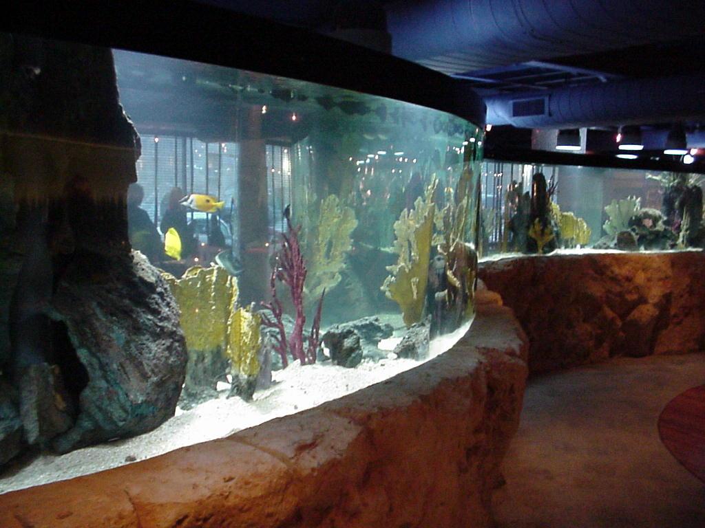 Shark Tank Exhibit