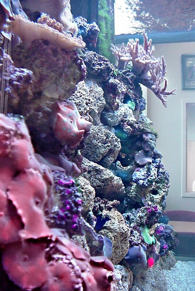 Live Reef Aquarium