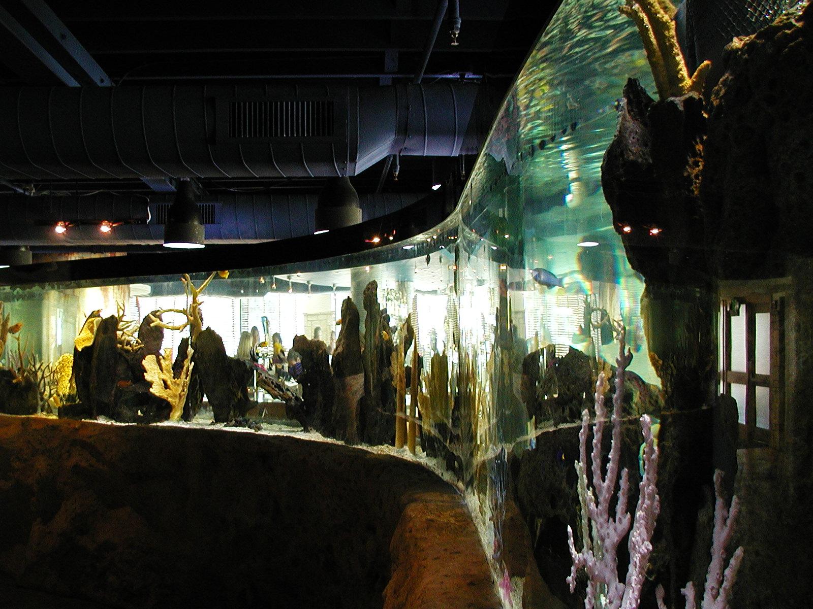 Shark Coral Reef Exhibit