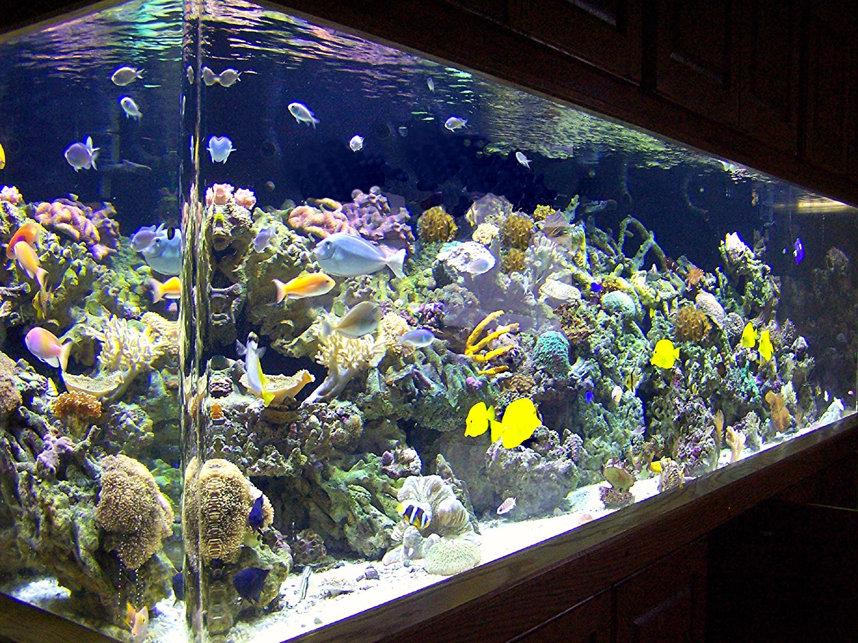 450 Gallon Reef Aquarium