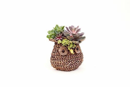succulent planter arrangement owl easy care wicker basket