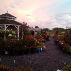 hillsborough at sunset
